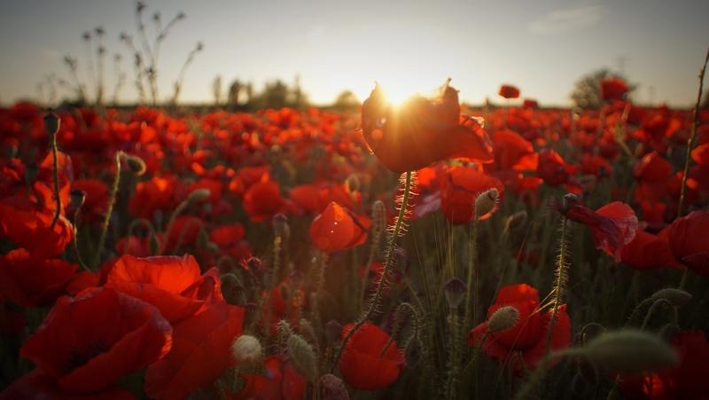 Mengenal Jenis Bunga Gantung Terpopuler